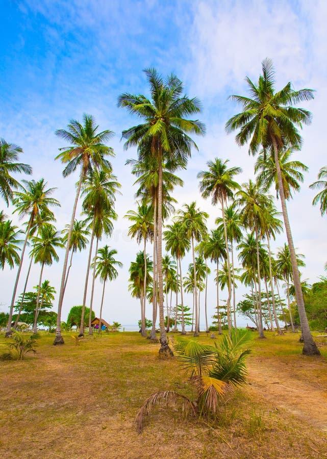 Palmen op het strand onder de blauwe hemel royalty-vrije stock afbeelding