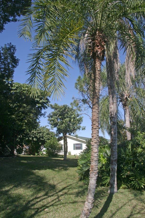 Bungalow in Palmen stock foto's