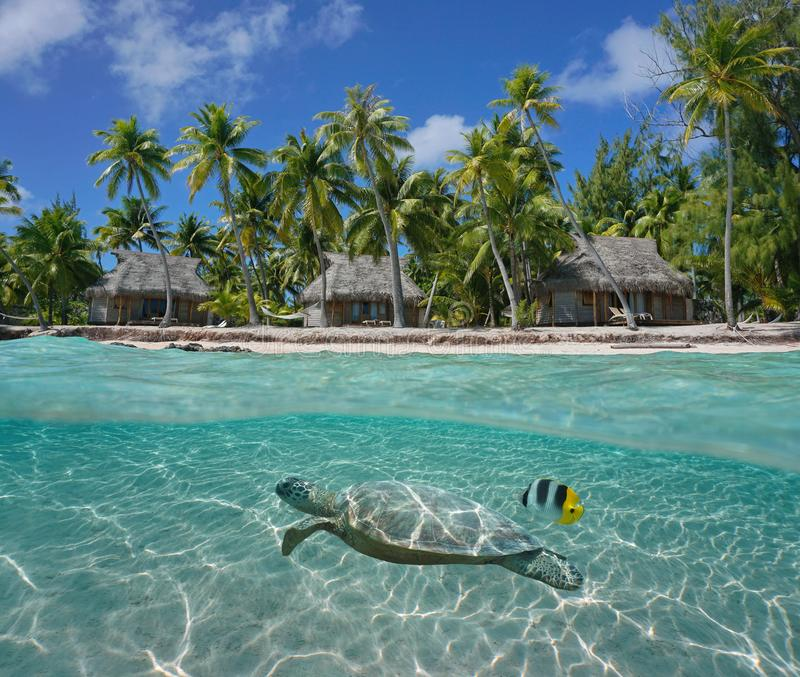 Bungalows on tropical coast and turtle underwater. Bungalows and coconut trees on tropical coast with a turtle underwater, Tikehau atoll, Tuamotu, French royalty free stock photography