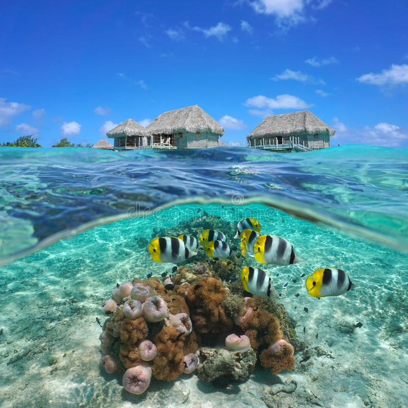 Free Bungalows With Colorful Tropical Fish And Anemones Royalty Free Stock Images - 136327639