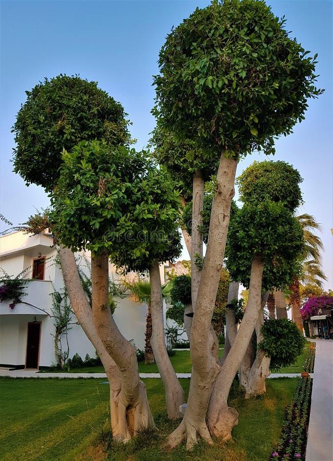 Bungalowwen, bomen, bloemen en lianes in tuin van familiehotel, Kemer, Turkije stock afbeelding