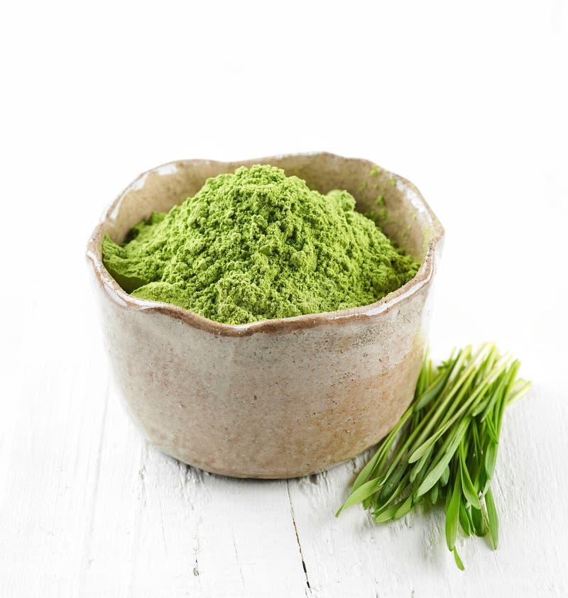 Bunke av grönt vetegräspulver royaltyfria foton