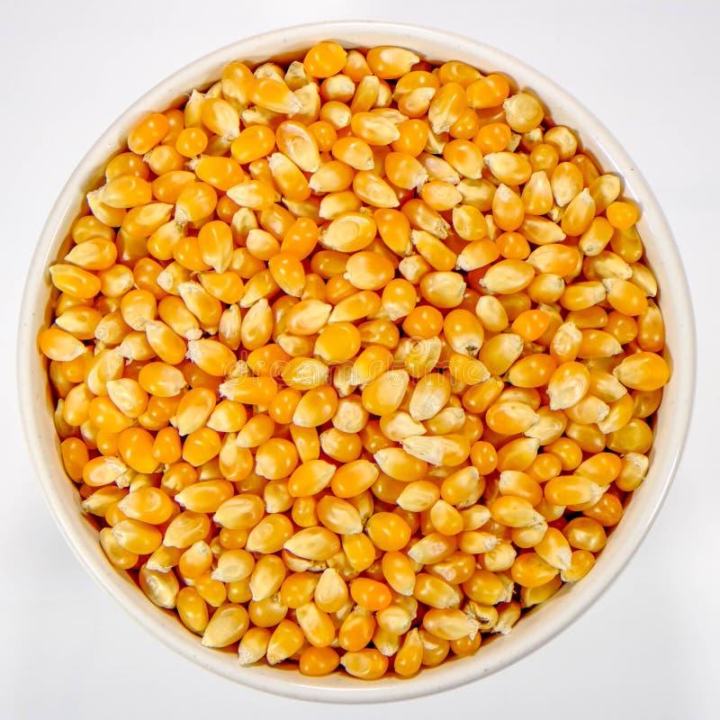 Bunke av okokt popcornmajs royaltyfri foto