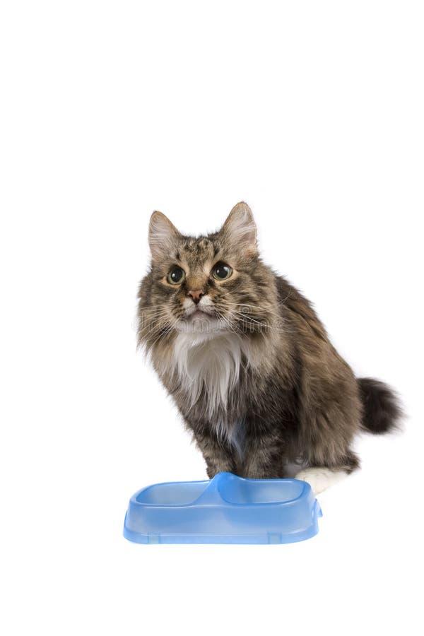 bunken cadge tomt mål för katten royaltyfria foton