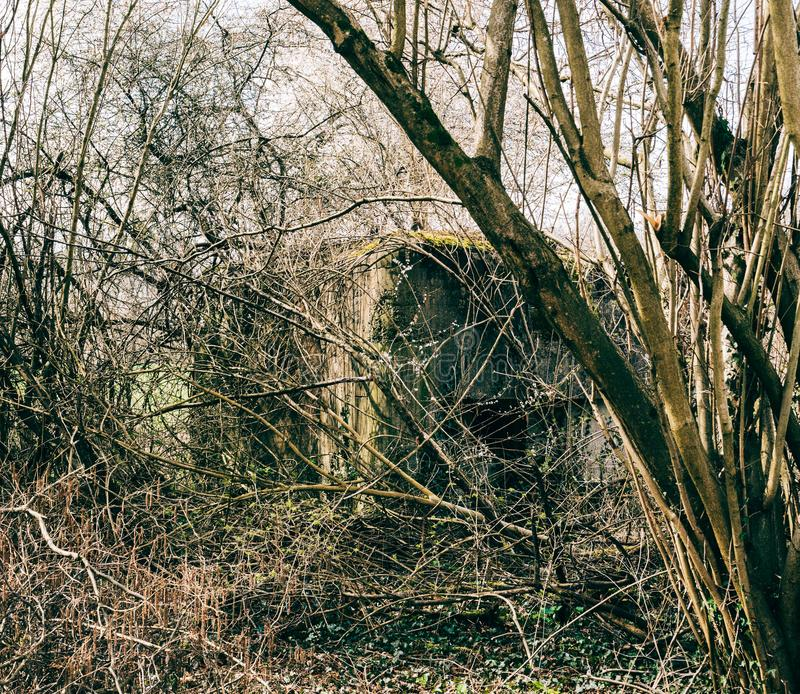 Bunker di WWII in foresta francese fotografia stock