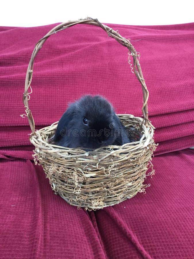 Bunnie basket. A cute bunny in a basket royalty free stock photos