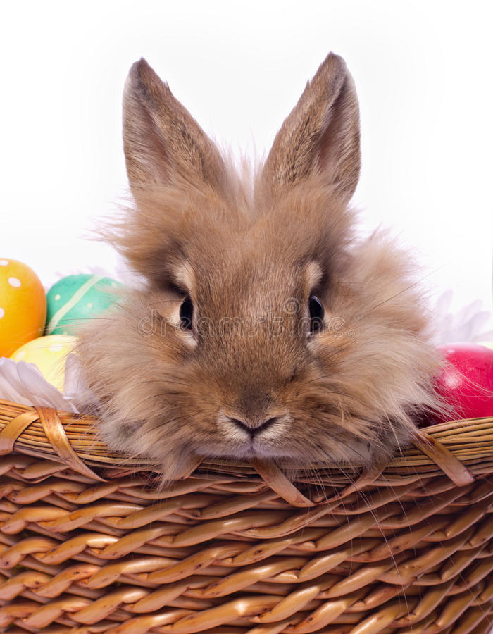 Download Bunnie's Portrait Royalty Free Stock Images - Image: 24056549