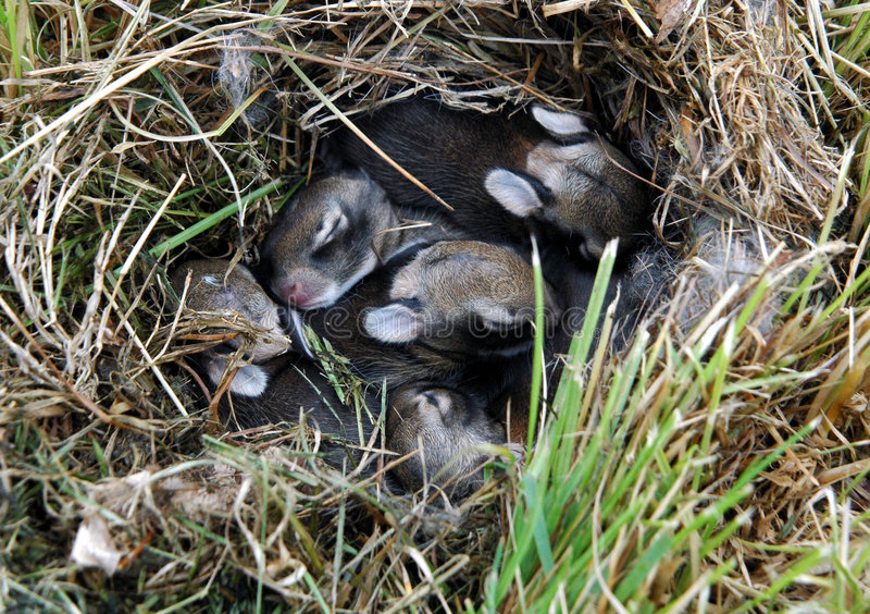 bunnies μωρών στοκ φωτογραφία