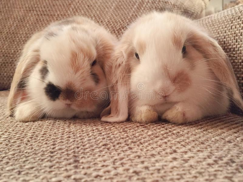 bunnies στοκ εικόνα με δικαίωμα ελεύθερης χρήσης