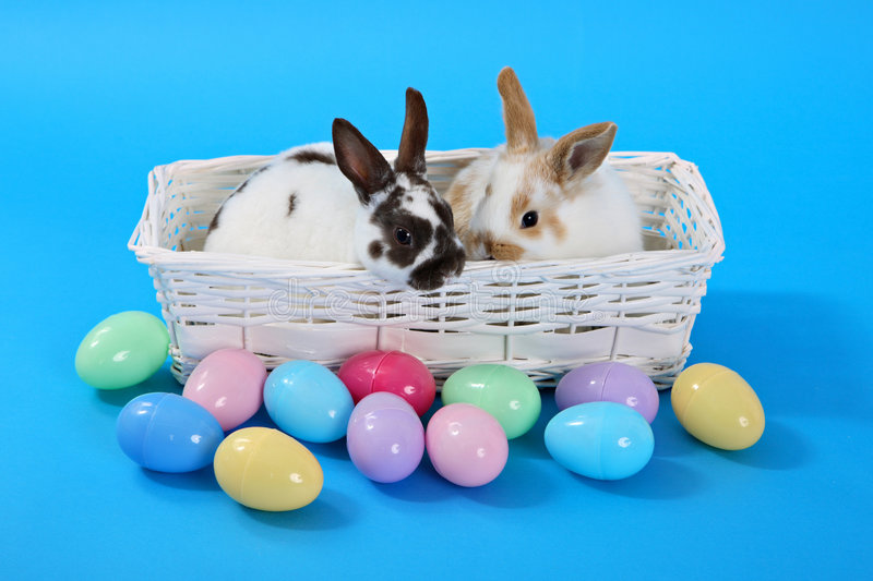 Bunnies on blue royalty free stock photography
