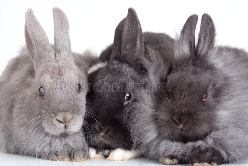 bunny απομόνωσε τρία στοκ φωτογραφία με δικαίωμα ελεύθερης χρήσης