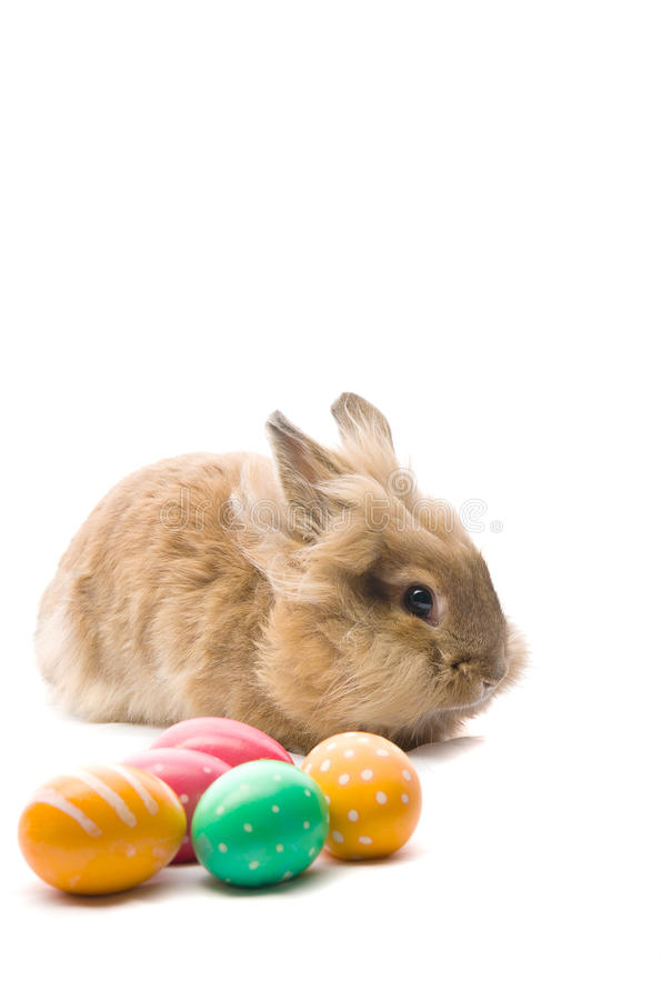 bunny ζωηρόχρωμα αυγά Πάσχας κοντά στη συνεδρίαση στοκ φωτογραφίες με δικαίωμα ελεύθερης χρήσης