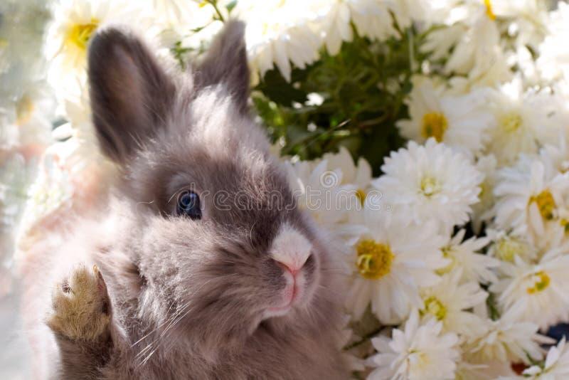 bunny λουλούδια στοκ εικόνες με δικαίωμα ελεύθερης χρήσης