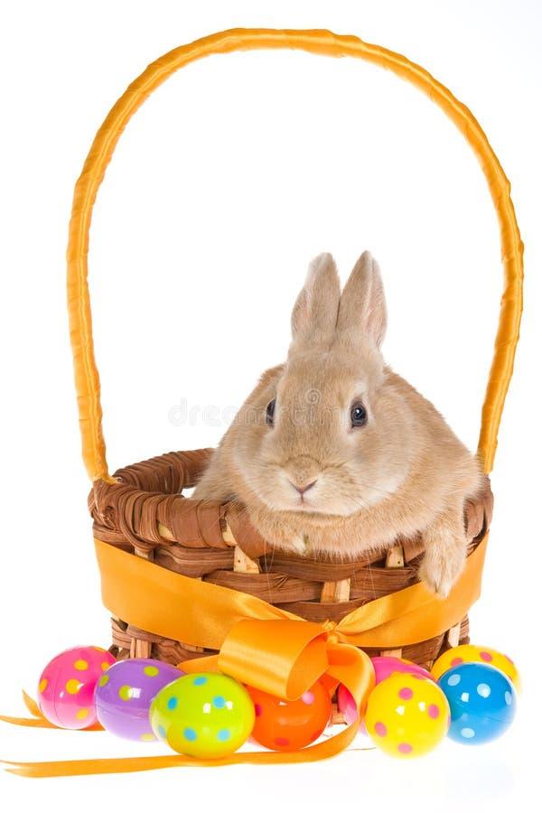 Download Bunny με τα αυγά Πάσχας στην άσπρη ανασκόπηση Στοκ Εικόνες - εικόνα από συνεδρίαση, ζωηρόχρωμος: 13176400