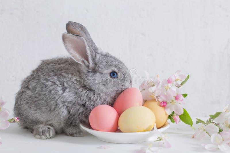 Bunny με τα αυγά Πάσχας στην άσπρη ανασκόπηση στοκ φωτογραφίες με δικαίωμα ελεύθερης χρήσης