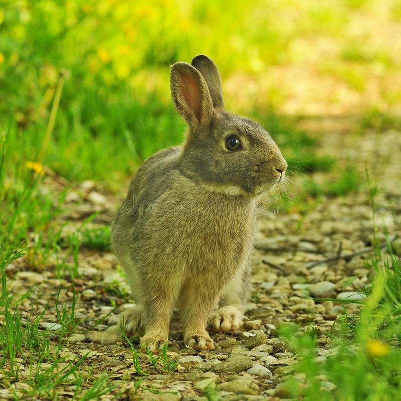 bunny χλόη στοκ εικόνες με δικαίωμα ελεύθερης χρήσης
