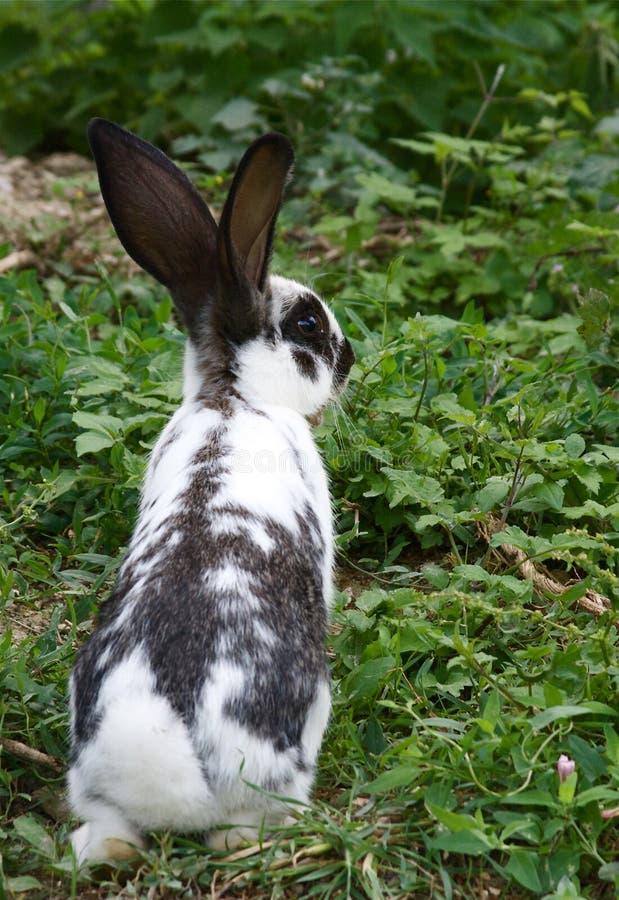 bunny χλόη στοκ φωτογραφίες