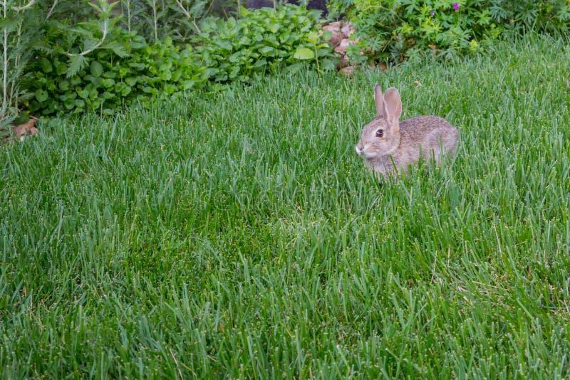 bunny χλόη ψηλή στοκ εικόνα με δικαίωμα ελεύθερης χρήσης