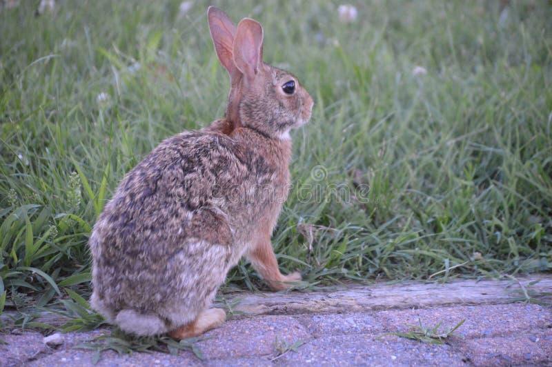 Bunny Bunny stockfoto