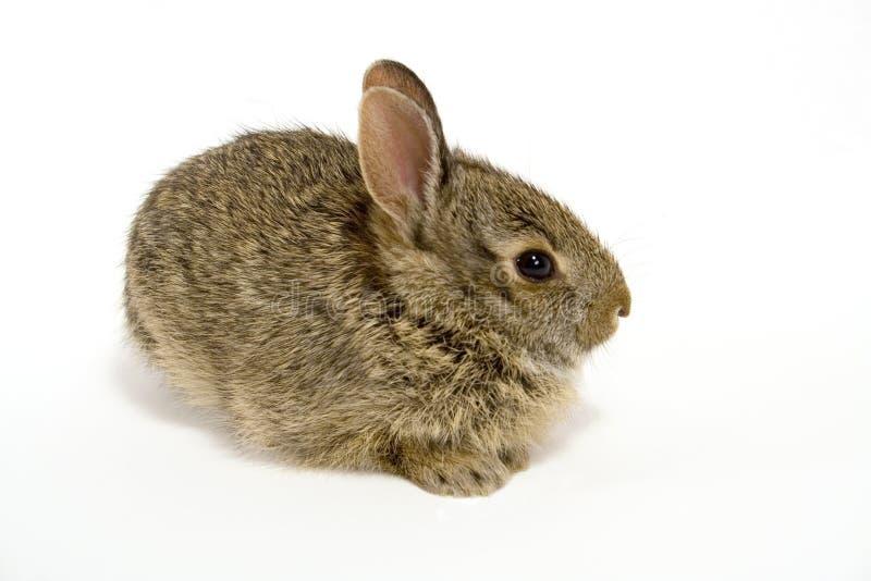 Bunny2 imágenes de archivo libres de regalías