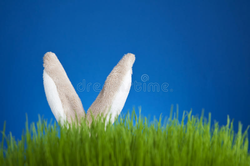 Bunny. Toy stuffed rabbit hidden in grass royalty free stock photo