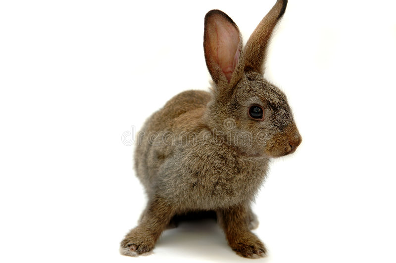 Bunny. On white isolated