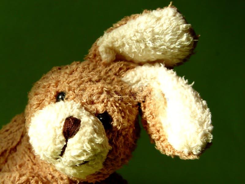 Bunny 3 Στοκ Εικόνες