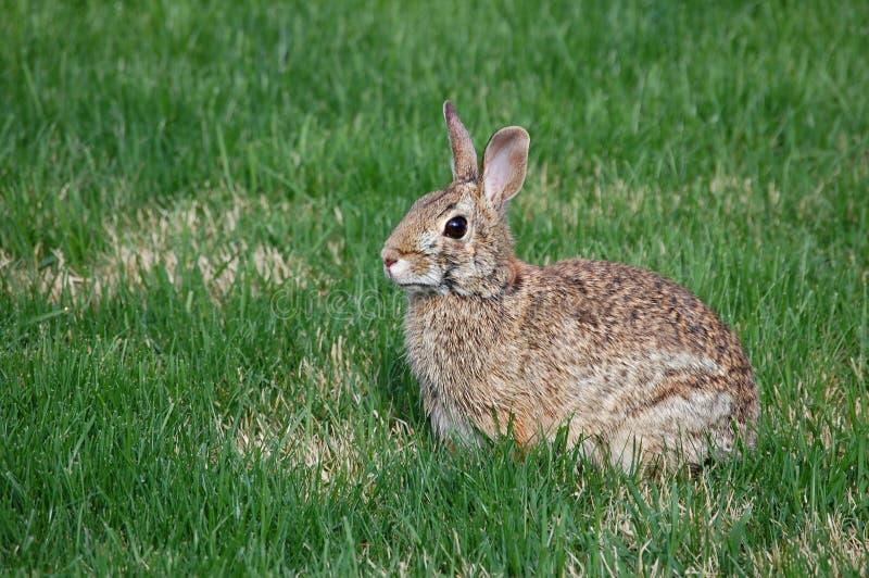 bunny fotos de stock