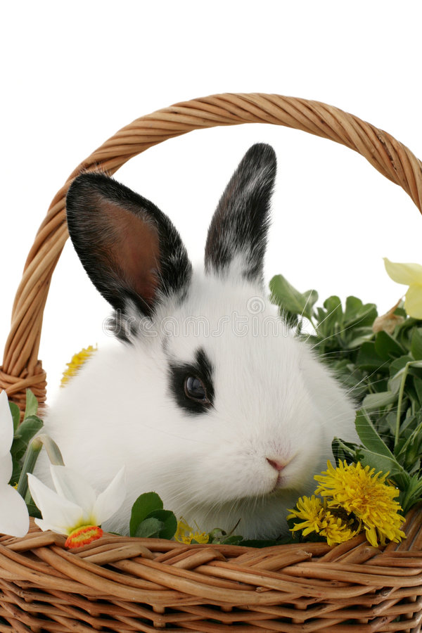 Download Bunny stock photo. Image of young, fluffy, rabbit, white - 4759964