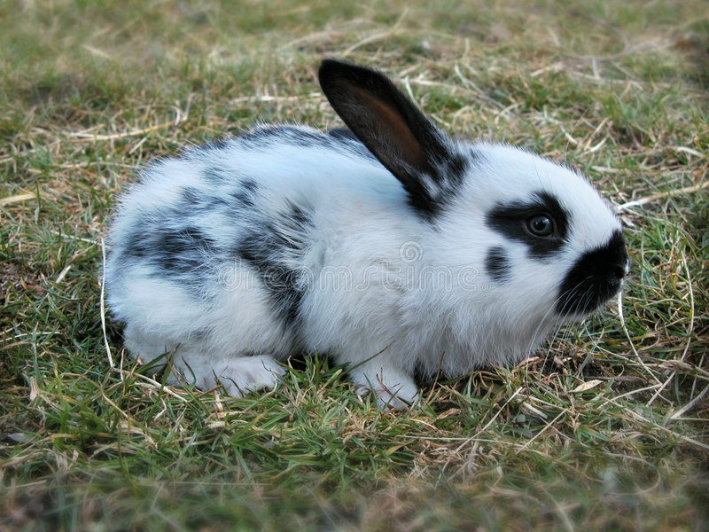 bunny στοκ φωτογραφίες με δικαίωμα ελεύθερης χρήσης