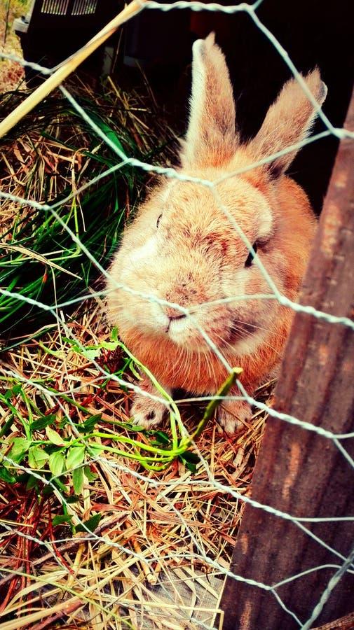 bunny imagens de stock royalty free