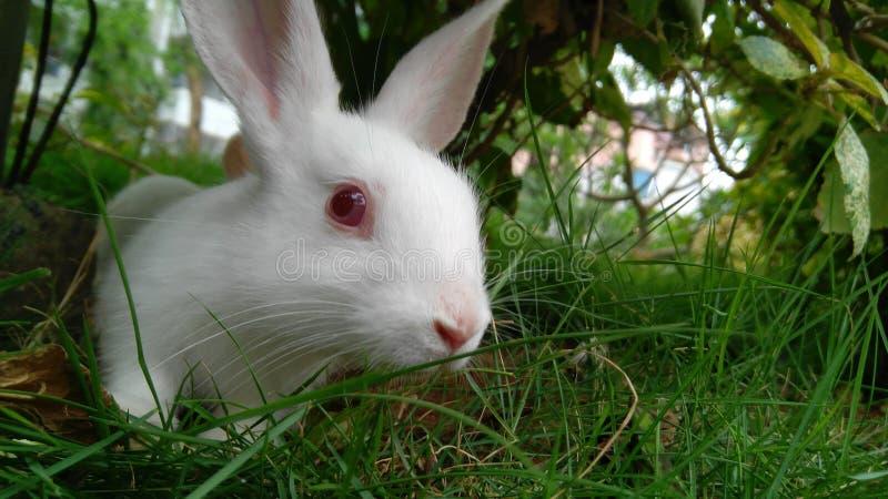 bunny fotos de stock royalty free