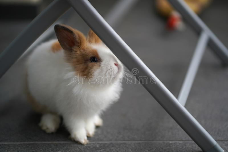 Bunny Is On The Balcony stockfoto