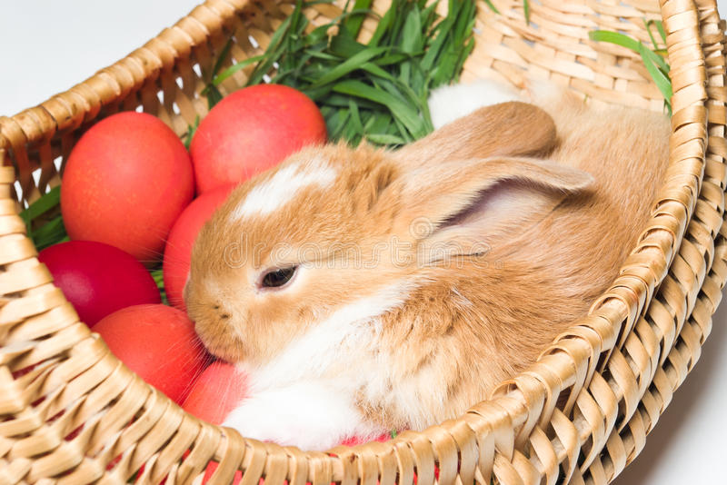 Download Bunny in basket stock image. Image of rodent, animal - 19108049