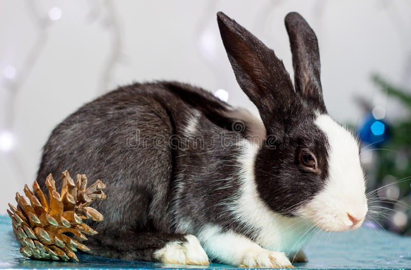 Bunny. stock photography