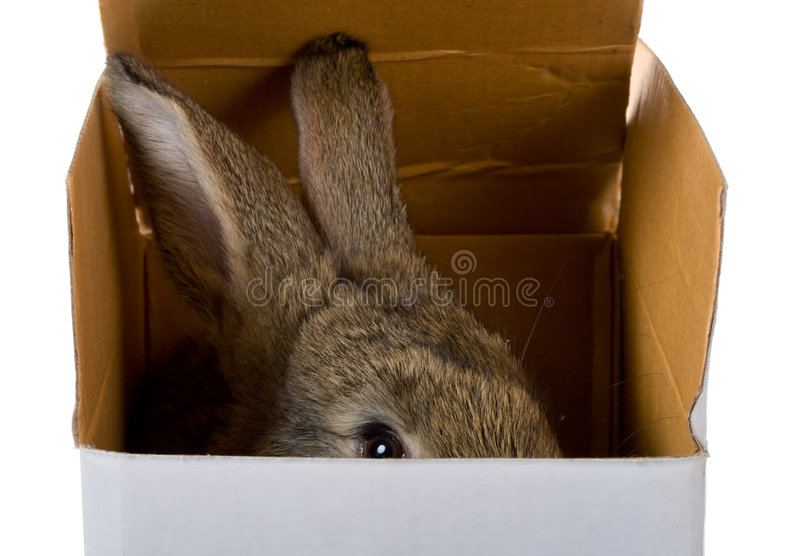 Bunny on box stock photography