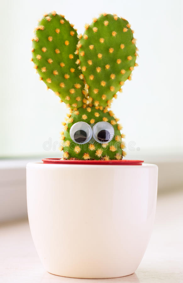 Bunny cactus royalty free stock photography