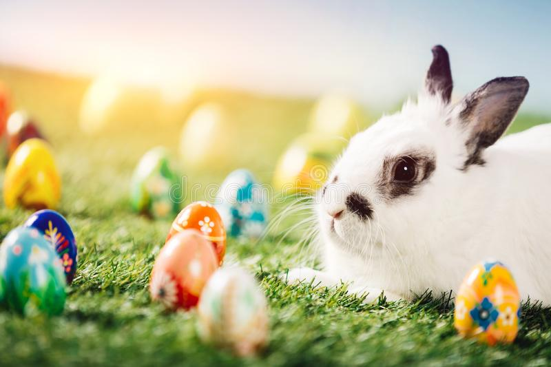 Bunny and colorful eggs on green meadow stock photography