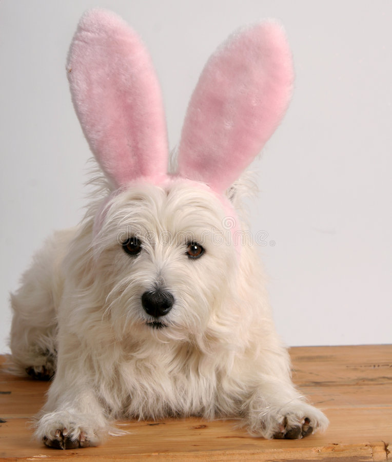 Free Bunny Dog Stock Photography - 617592