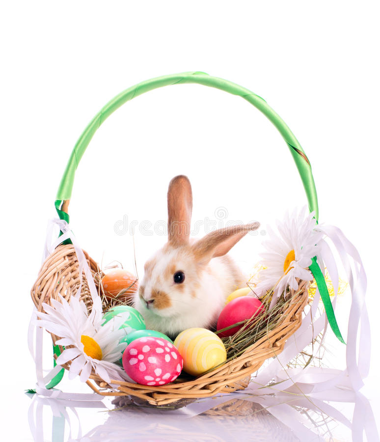 Bunny in easter basket. With easter eggs isolated on white royalty free stock photography