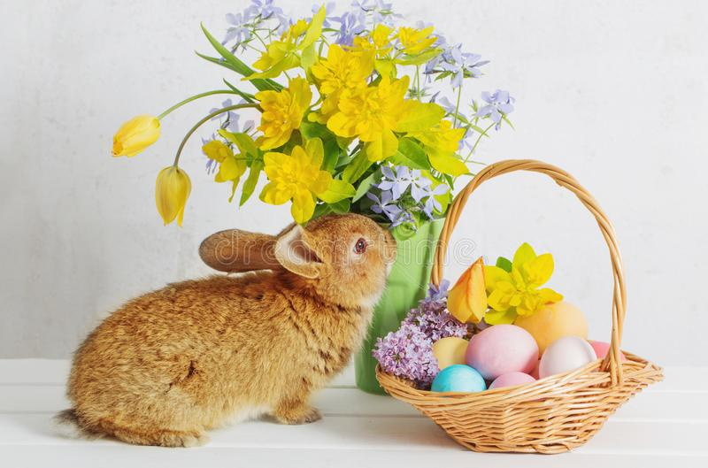 Bunny with easter eggs and flowers. On white background royalty free stock photography
