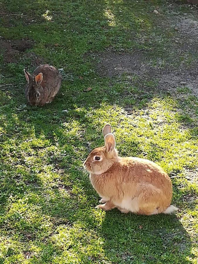 Bunny stock photography