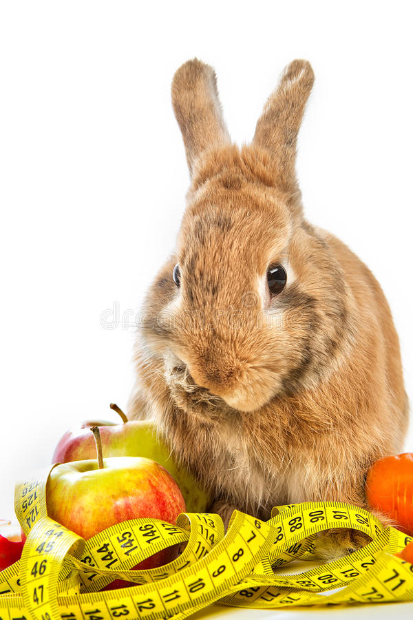 Download Bunny With Fresh Vegetables Stock Photo - Image: 29293644