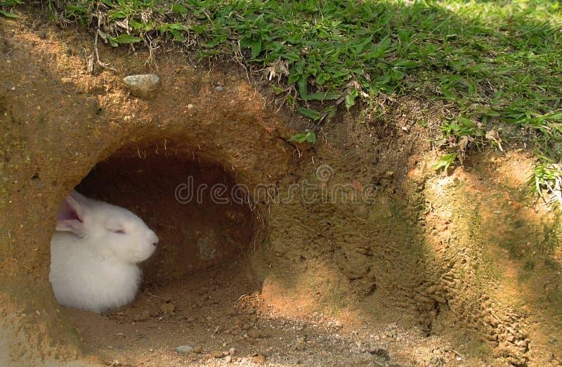 Bunny At Home stock photo