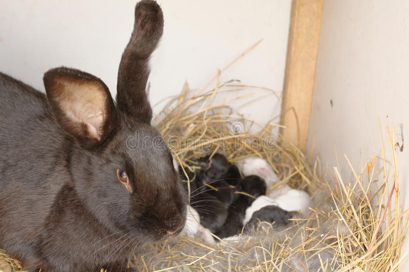Bunny nest stock images