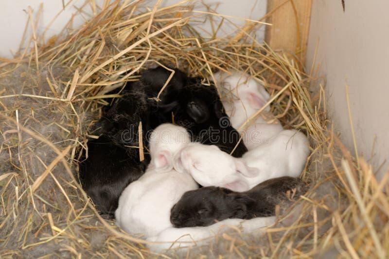 Bunny nest royalty free stock image