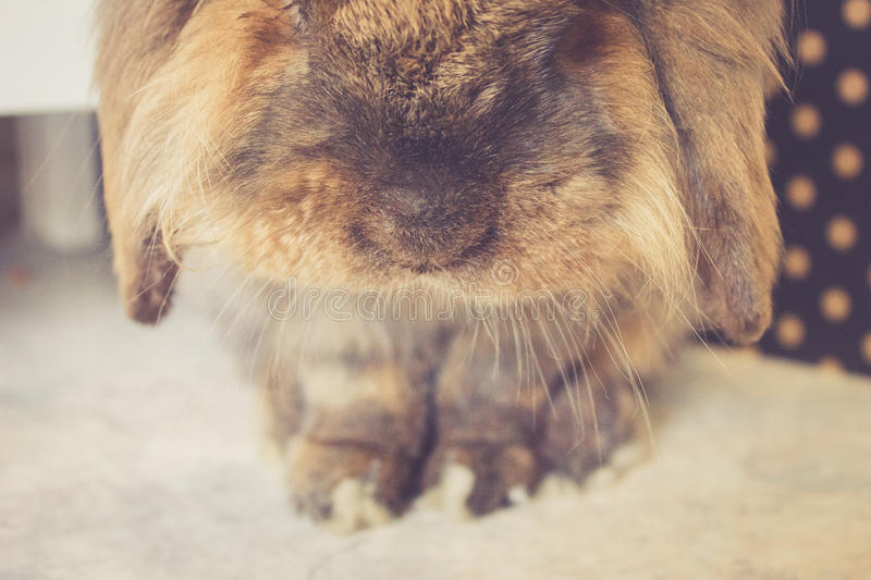 Bunny nose stock images