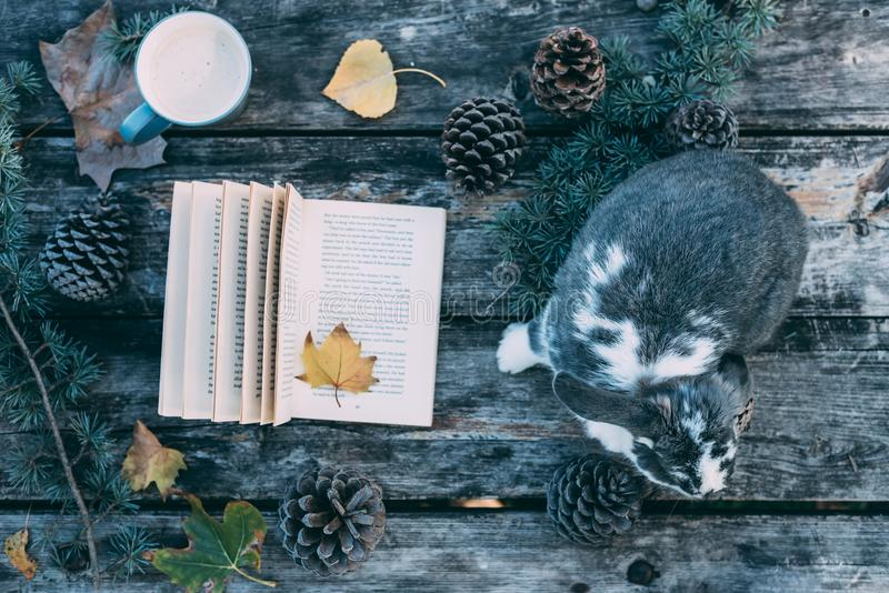 Bunny pet and Book on a wooden table with coffee and pines outdo. Cute bunny pet and Book on a wooden table with coffee and pines outdoor stock image