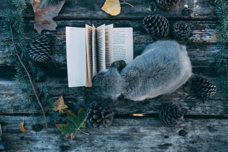 Bunny pet and Book on a wooden table with coffee and pines outdo. Cute bunny pet and Book on a wooden table with coffee and pines outdoor royalty free stock image