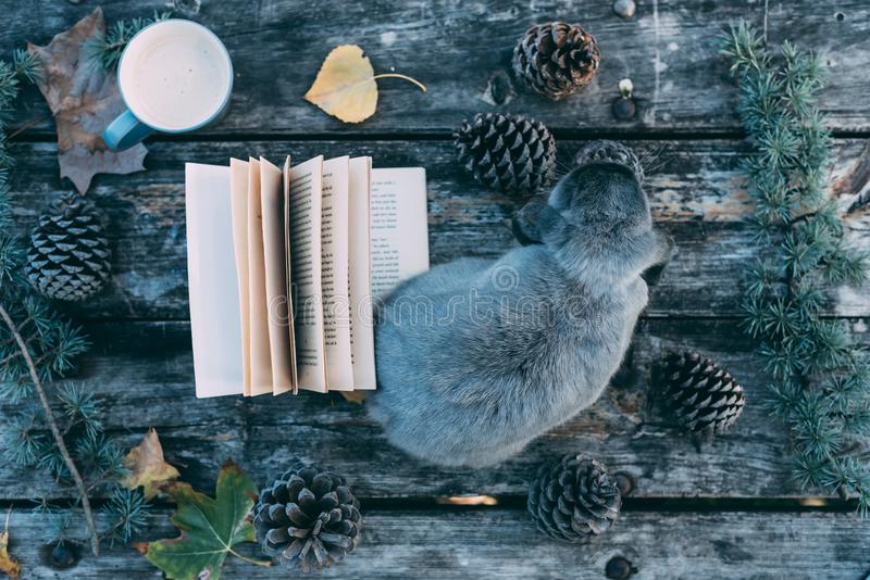 Bunny pet and Book on a wooden table with coffee and pines outdo. Cute bunny pet and Book on a wooden table with coffee and pines outdoor royalty free stock photography